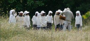 Visite des ruches