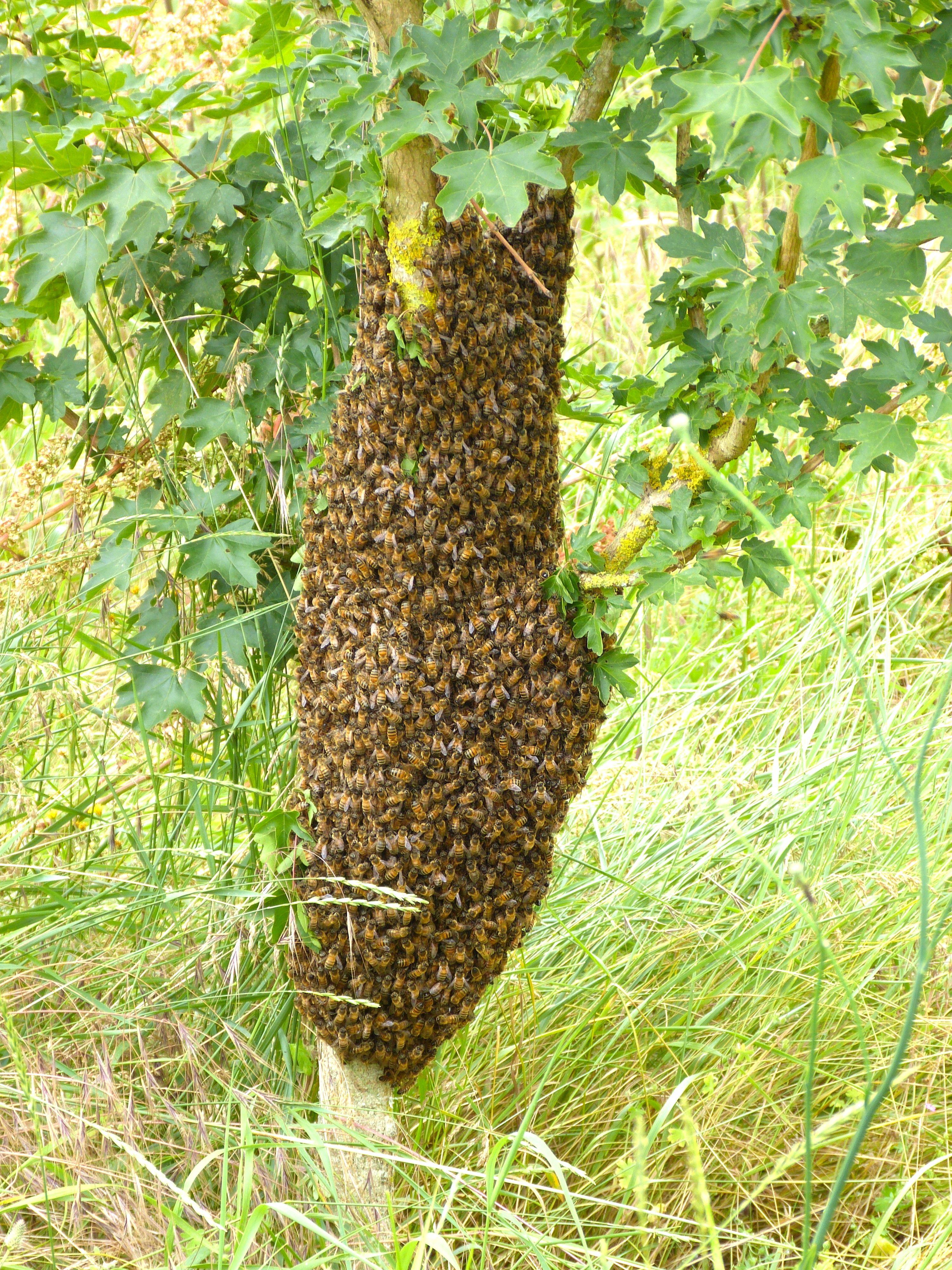 La maison des abeilles 72 ferme p dagogique pour - Comment se debarrasser des abeilles dans une cheminee ...